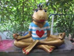 Frosch meditierend