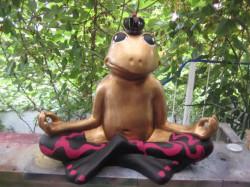 Frosch meditierend_17