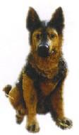 Hunde aus GFK und Fieberglas_27