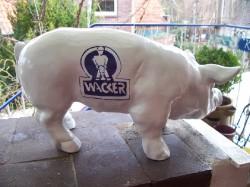 Kleine Schweine_325