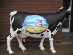 Melkkuh, Kühe zum Melken